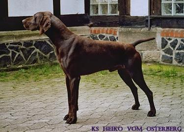 KS Heiko vom Osteberg
