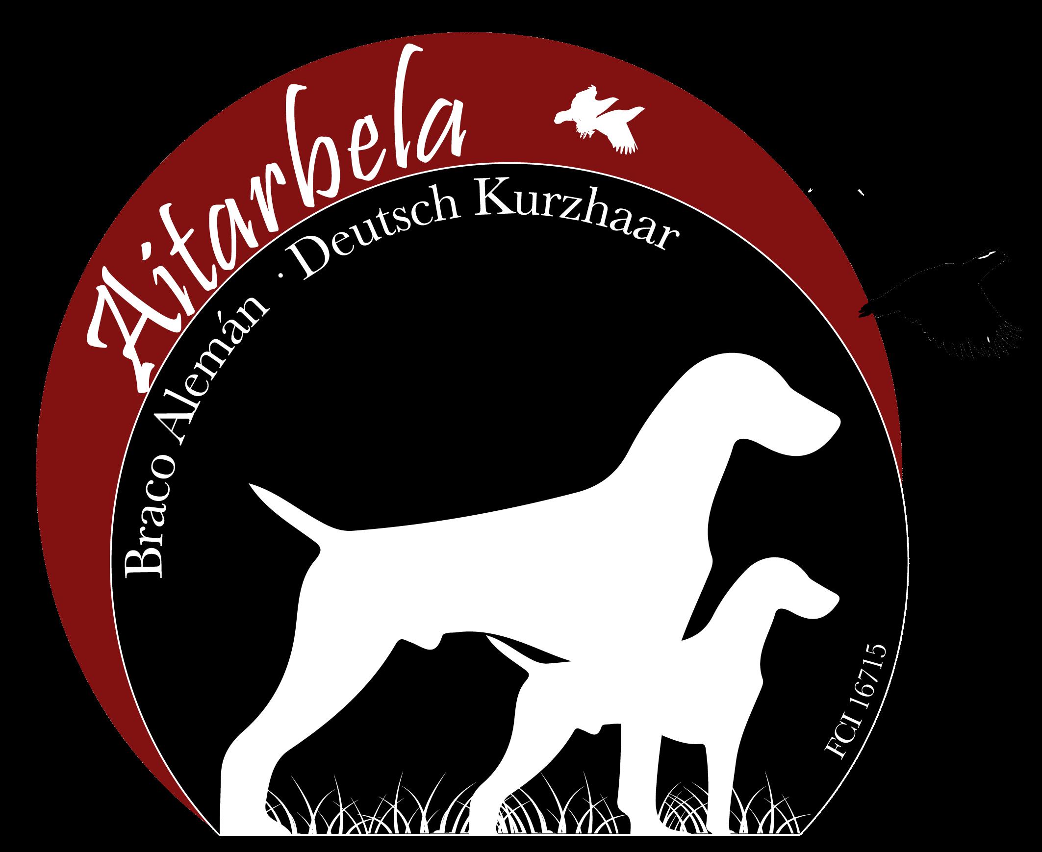 AITARBELA – Deutsch Kurzhaar
